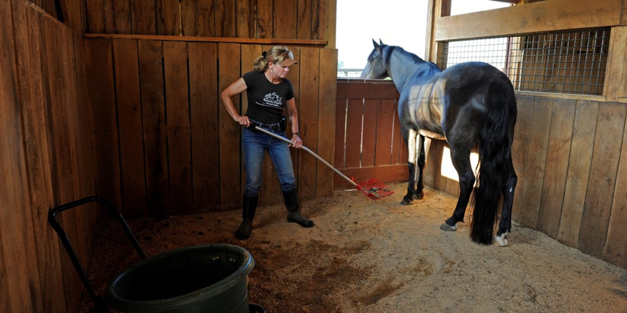 Tips For Maintaining A Healthy Horse Barn Central