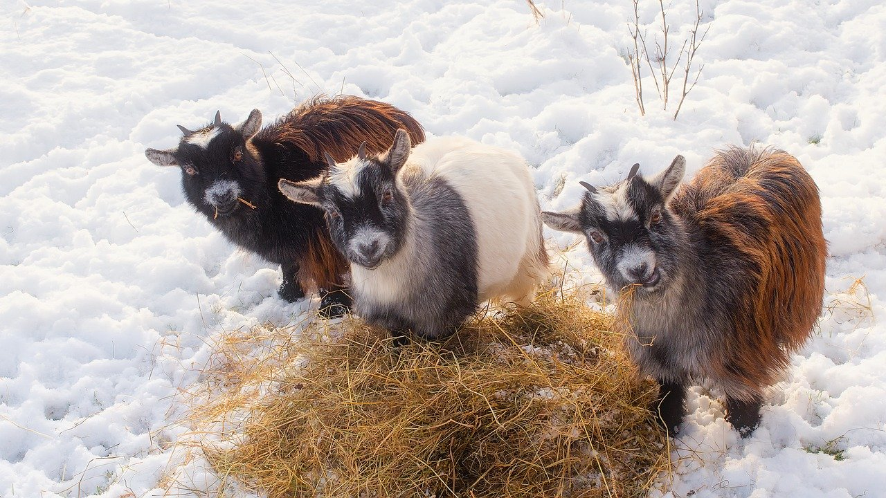 5 Ways to Prepare a Farm for Winter